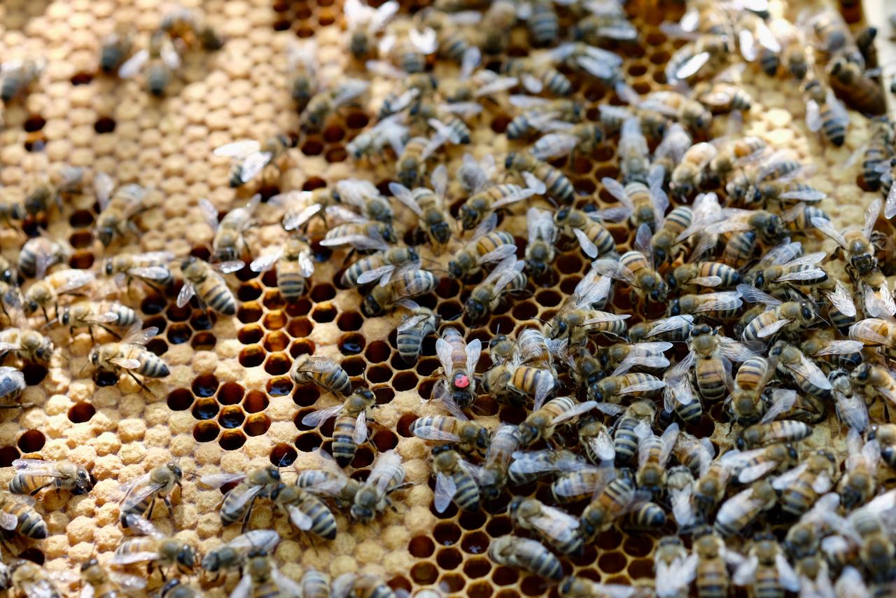 Bienen und Imker